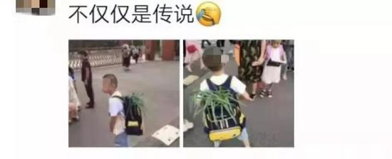 小学生背着葱上学乐坏网友:考不上清华对不起葱